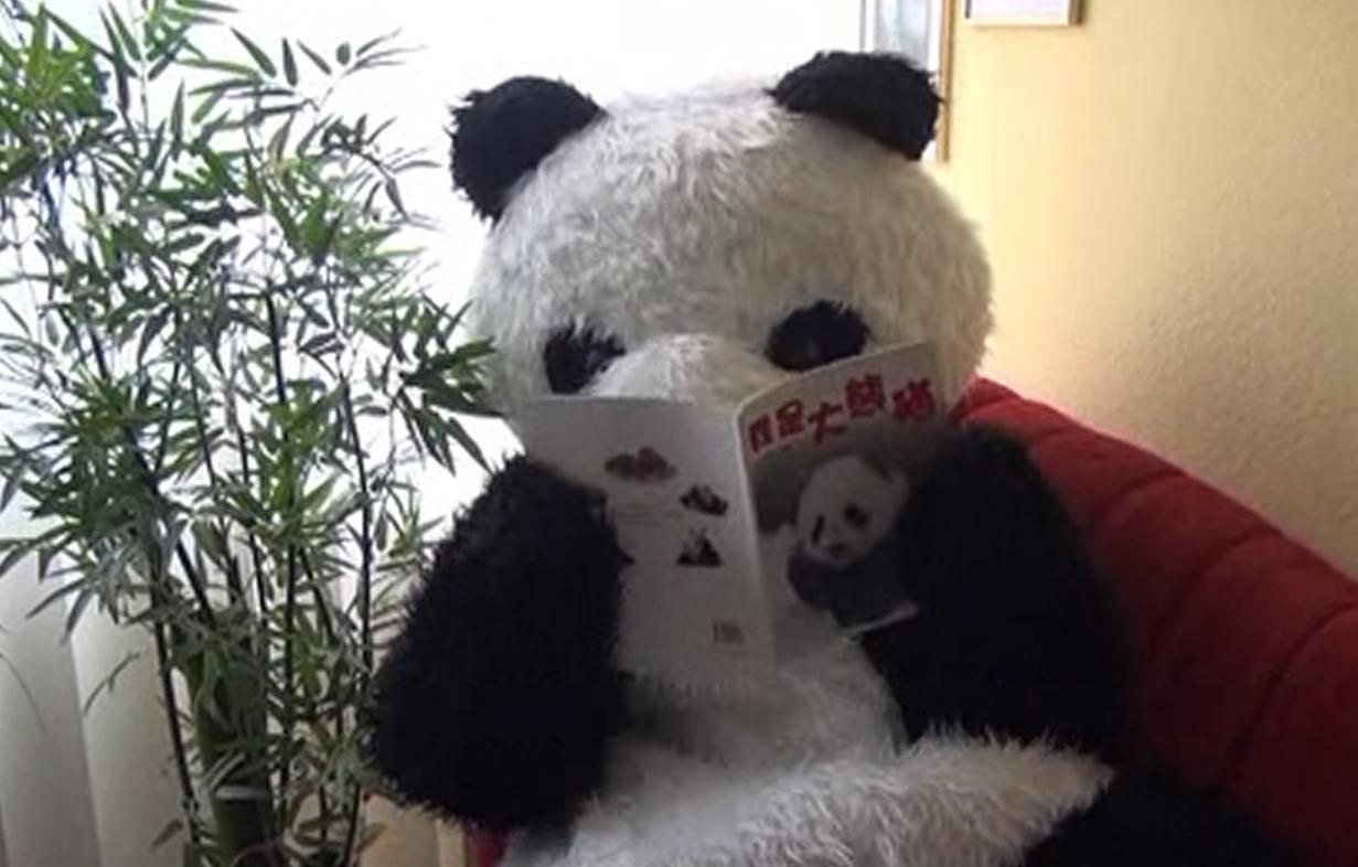Wo schläft Großer Panda?