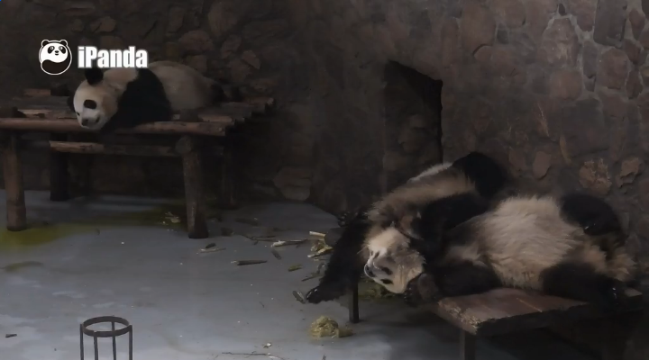 PandaVatertag1