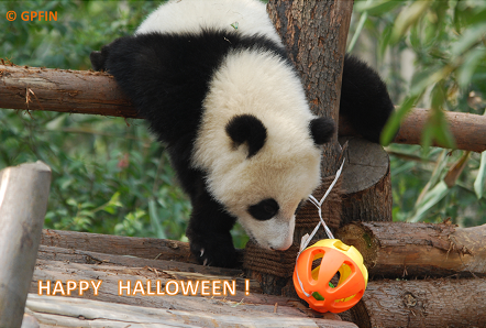 Happy Halloween for all Friends!