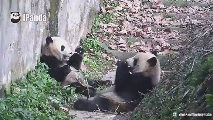 Aktivitäten auf der Panda Base